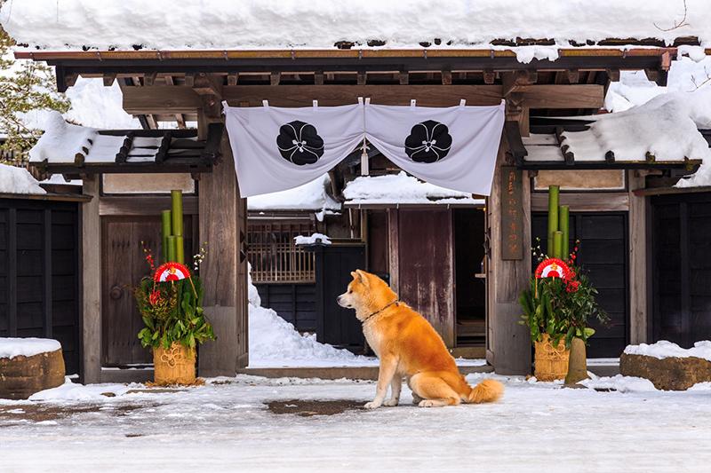 秋田犬(県)